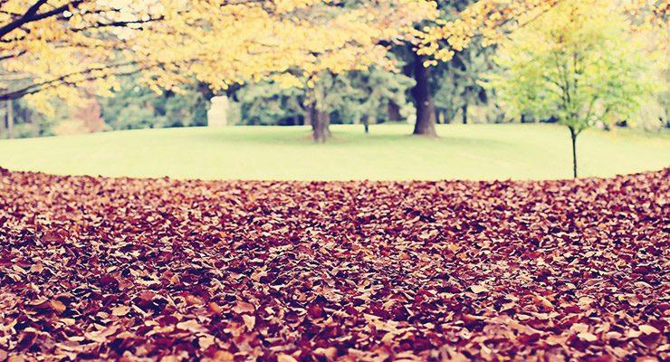 blog-park